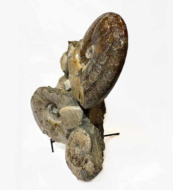 Agate Designs Ammonite Cluster Side Edit